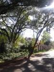 kabasarian avenue