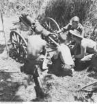 1942-12-31. BUNA. AN AUSTRALIAN MOUNTAIN BATTERY SHELLS BUNA. (NEGATIVE BY G. SILK).