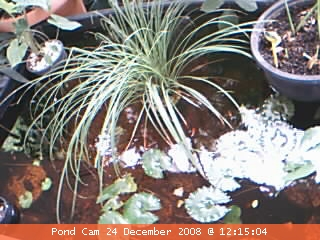 Pond Cam - is that Dave Stewart?