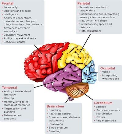 Know different parts of the brain to prevent Dementia