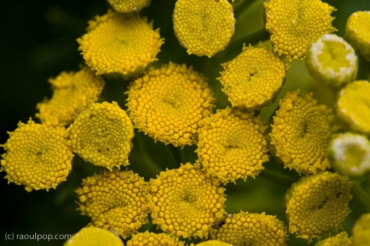 Happy little flowers II