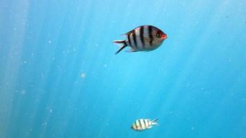 Ikan di Karimunjawa