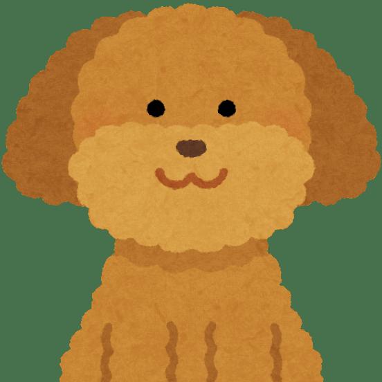 cropped-dog_toypoodle_brown