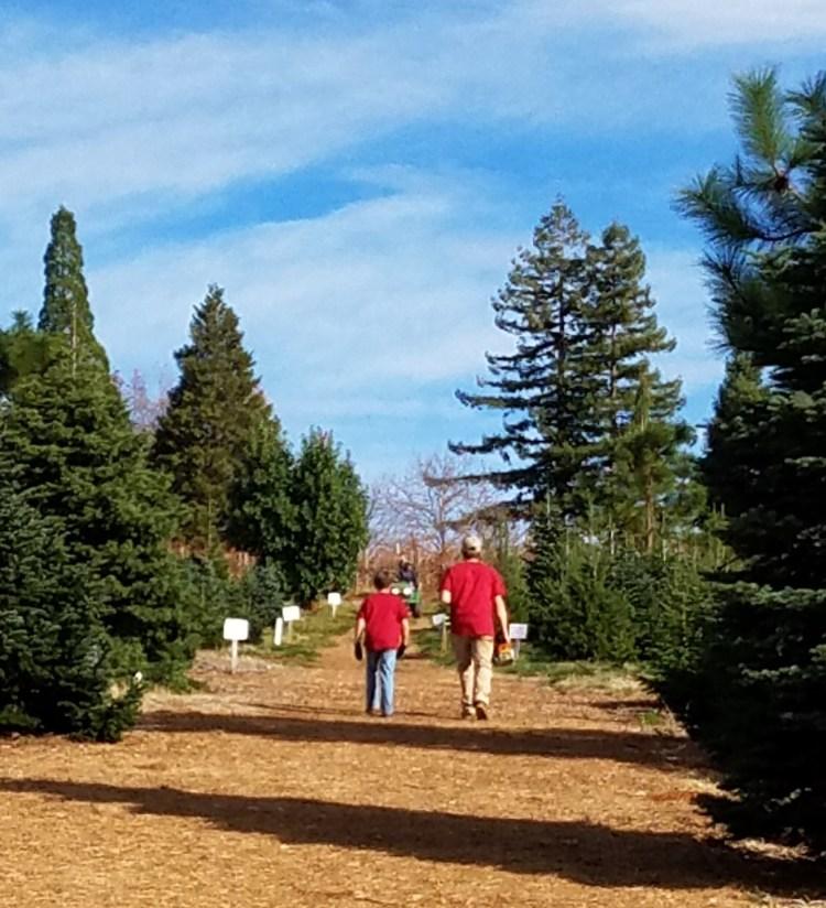 Rapetti Farms Trees