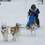 Schlittenhunderennen in Kandersteg