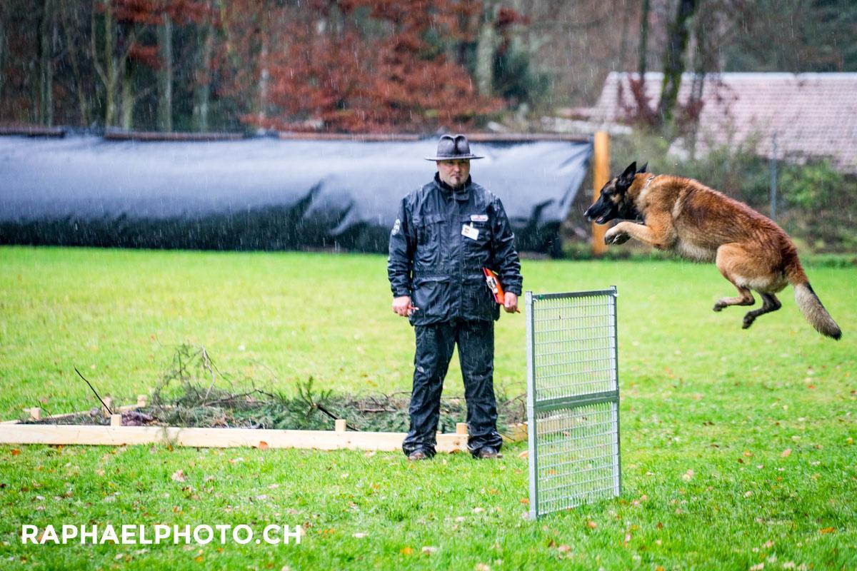 Diensthundewettkampf mit Militär- und Polizeihunden - Parkour