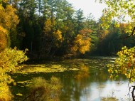 All things golden on the Pine River