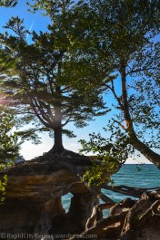 Pictured Rocks - Chapel Rock-awesome tree