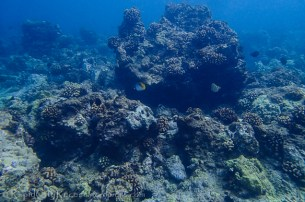 Maui coral reef and fish