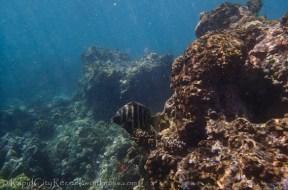 Maui reef fish-1