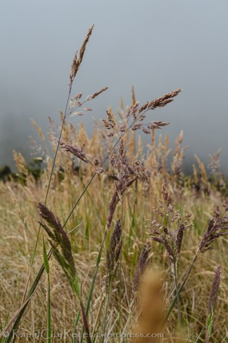 Purple seed heads on grass, backed by clouds