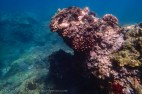 typical Maui reef-1