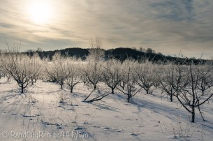 frosted orchard-2