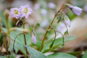 little spring wildflowers-2
