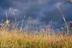 dramatic hay