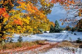 fall lane under snow