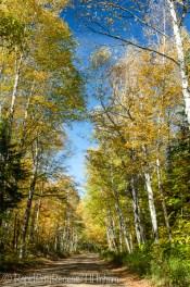 Proud trees
