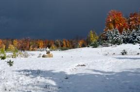 snow on burning trees