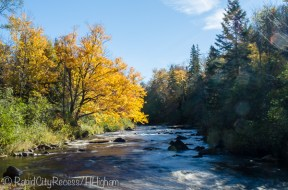 Yellow tree on Sturgeon River