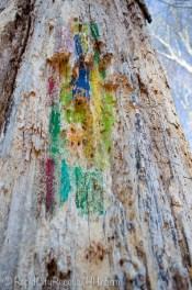 tree rainbow-2