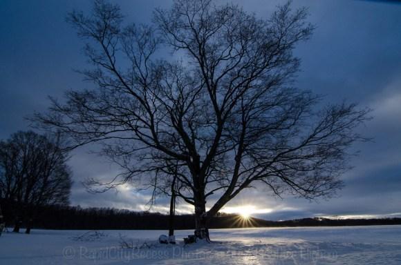 drifting tree
