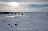shoreline and ice