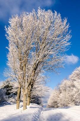 fresh snow-11