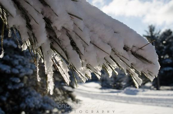 fresh snow-13