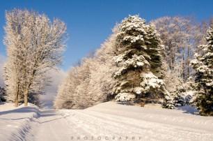 fresh snow-9