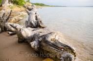 driftwood on the beach-2
