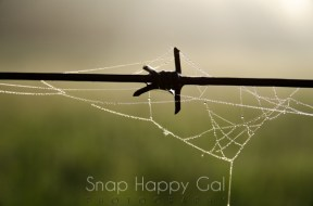 spiderweb on barbed wire