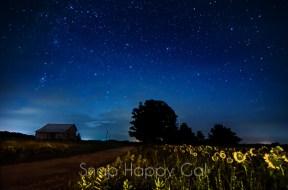 sunflowers at night-2