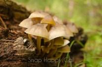 Mushroom Monday-11