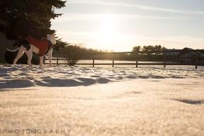 Petey-snow