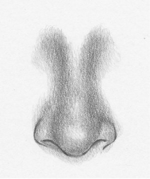 draw nose noses easy step shape simple shade steps