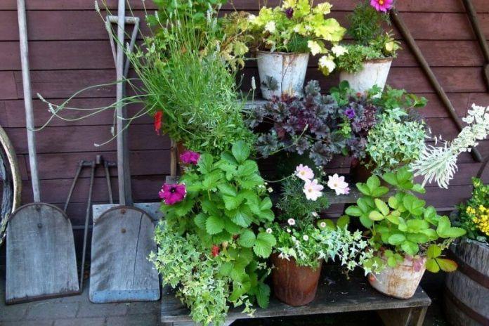 plant, potted plant, pottery, jar, vase, planter, herbs