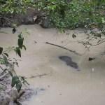Belize and Tikal, Guatemala photo album now up