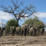 Victoria Falls Weekend: Chobe National Park in Botswana