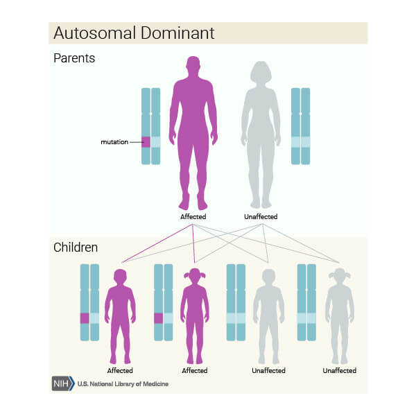 model de transmitere genetică autozomal dominant