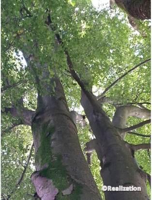 tree11 _4oct14