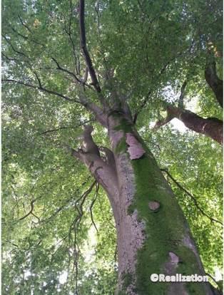 tree12_4oct14