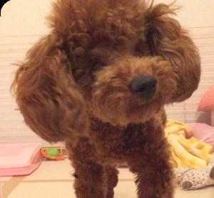 Hikari-smile