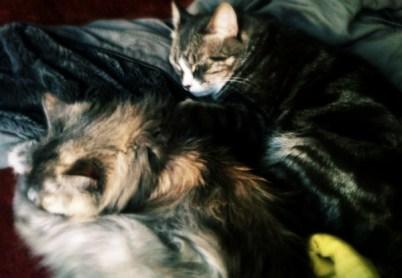 grateful-cats
