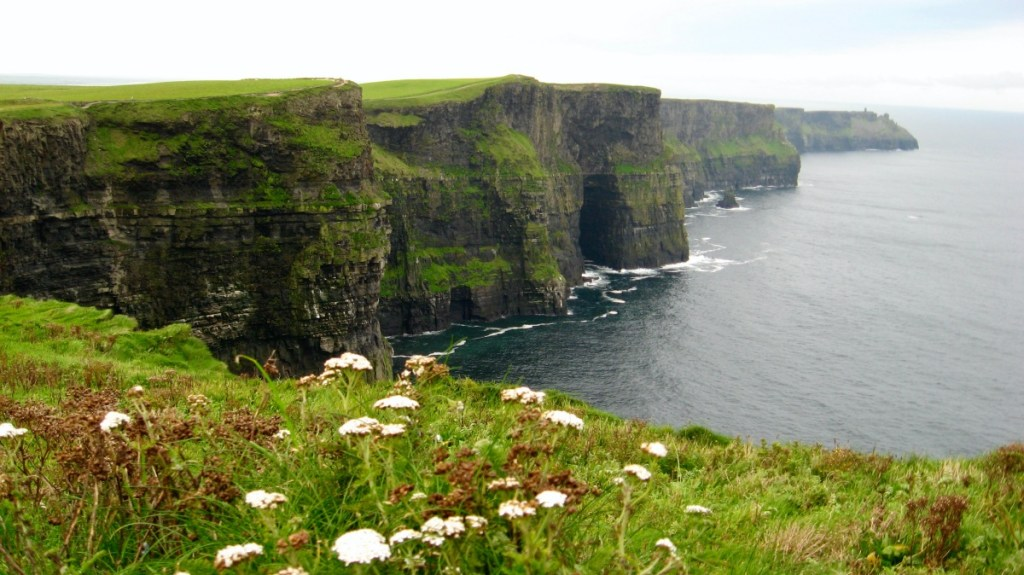 Ireland Cliffs of Moher and flowers