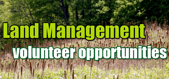 Land Management volunteer opportunities, tall grass
