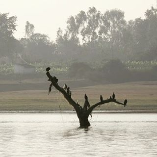 Misty mornings in Kabini one of the best wildlife sanctuarieshellip