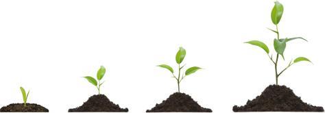 rasja.nl-feedback-als-instrument-om-mensen-te-laten-groeien-feedback-groeiende-plantjes