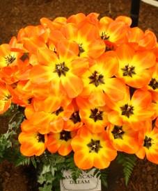 2014-04-15 Tulips-14 202