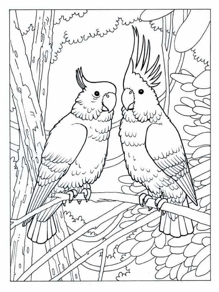 Ausmalbilder Papagei Drucken Sie kostenlos für Kinder