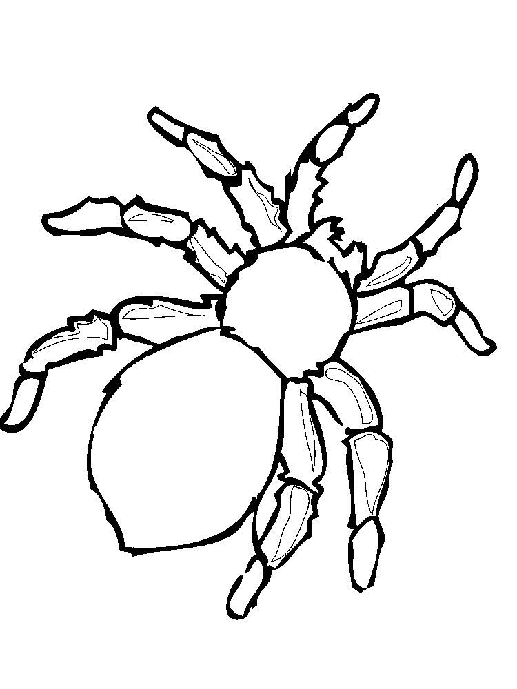 Раскраска паук скачать и распечатать